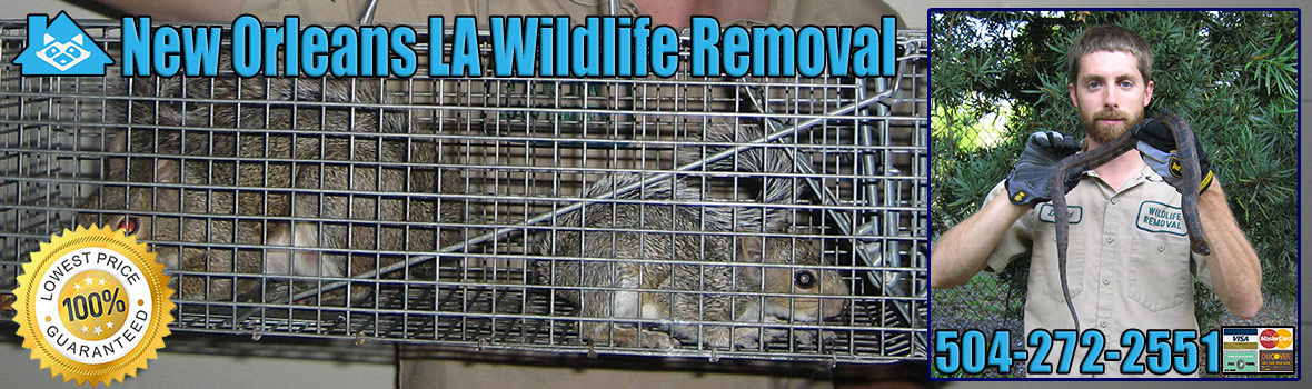 New Orleans Wildlife and Animal Removal